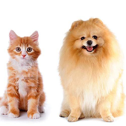 ETbotu Heimtierbedarf 100pcs Pet Wipes für Hunde Katzen Ohrenreiniger