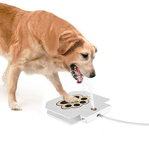 Anself Hund Trinkbrunnen Wasserfontäne für Hunde aus Edelstahl