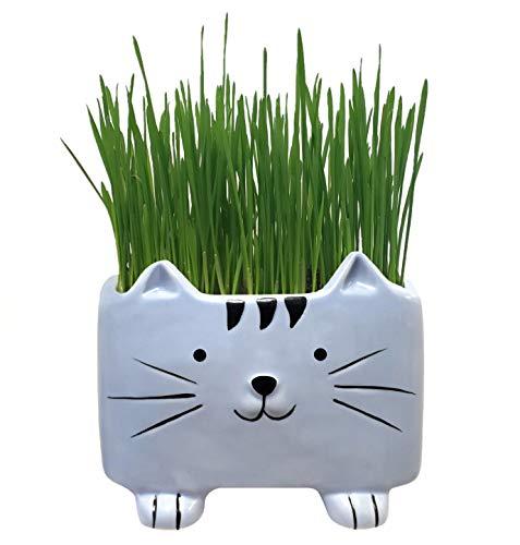 The Cat Ladies Bio Katzengras-Set mit Pflanzgefäß, Samen und Erde Bereit zum...
