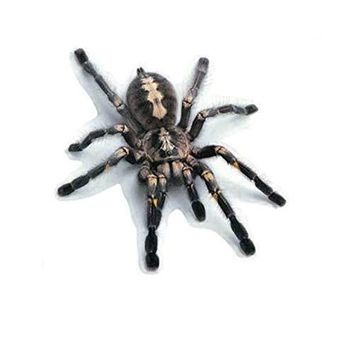 Nbvcxz 3D Skorpion Spinne Aufkleber angebrachte kleine Eidechse Tier Aufkleber...