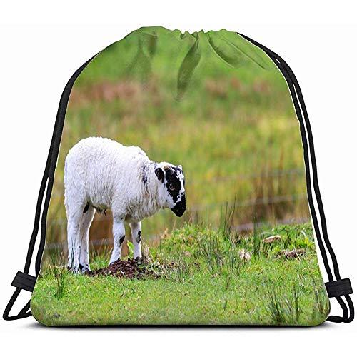 Fang-shop Scottish Blackface Sheep Standing Meadow Animals Wildlife...