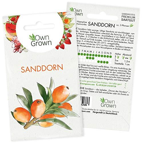 Sanddorn Samen: Premium Sanddorn Saatgut für 5 Sanddorn Pflanzen – Sanddorn...