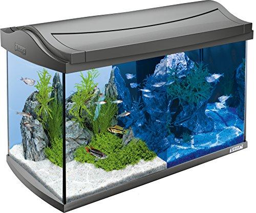 Tetra AquaArt Discovery Line LED Aquarium-Komplett-Set (inklusive...