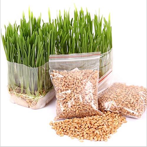 Homemust 400 Körner Hairy Ball und Bio Cat Grass Seed Khaki für den Hausgarten