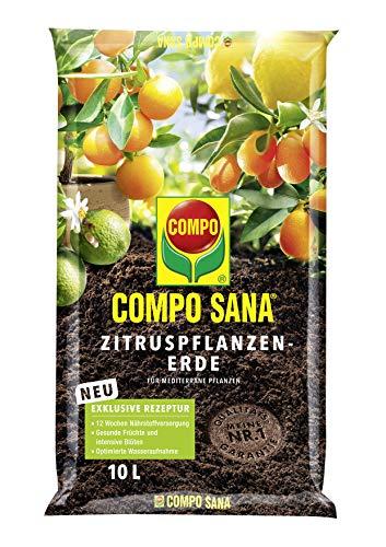 Compo SANA Zitruspflanzenerde mit 12 Wochen Dünger für alle Zitruspflanzen und...