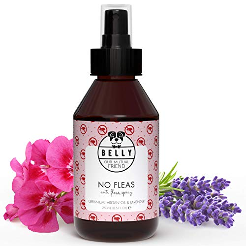 BELLY Floh Hundespray gegen Flöhe - 100% Natürliches Zeckenmittel für Hunde,...