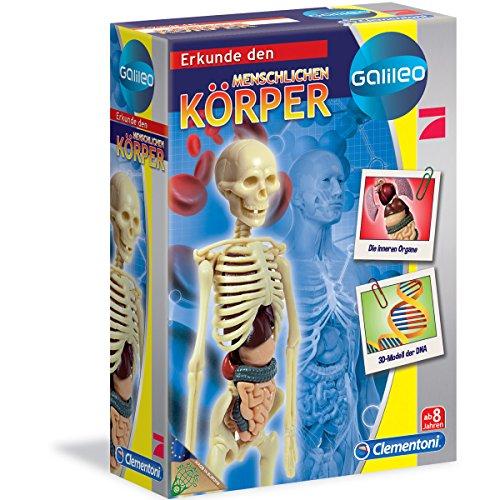 Der menschliche Körper - Anatomiemodell - Galileo - viel Zubehör - ab 8 Jahre...