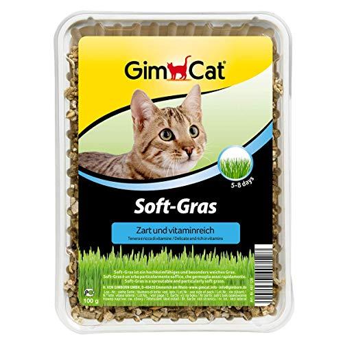 GimCat Soft-Gras - Zartes und vitaminreiches Katzengras mit schneller Aufzucht...