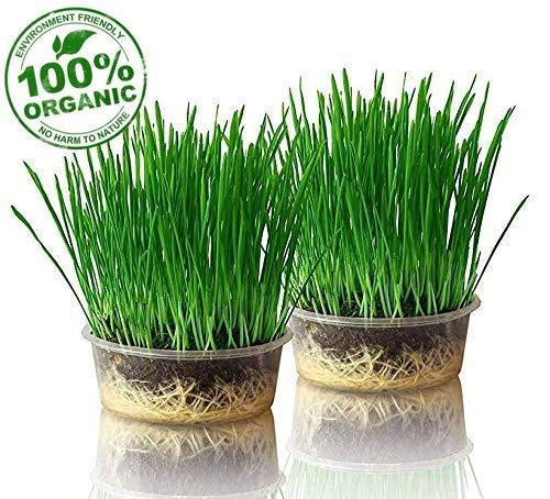 purr paw 2er Pflanzset für Katzengras, Set aus Bio-Samen, Schale und Kompost,...