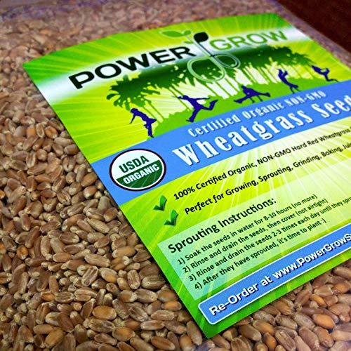 Ferry 10000: Weizengras/Katzengras Samen ~ Certified USDA Organic beträgt 50...